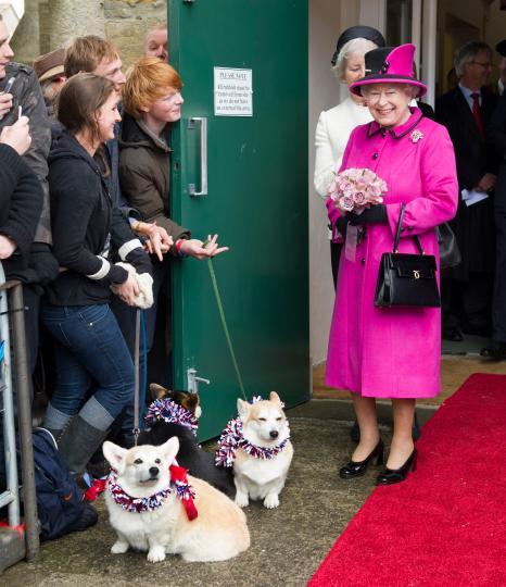 <p>Кралицата&nbsp;има и <strong>доргис</strong> - кръстоска между корги и дакел. Кралските кучета имат собствена стая и храна, специално приготвена от кралския готвач, но всеки ден, когато има възможност, кралицата ги храни лично в 17 ч., сресва ги и&nbsp;ги разхожда сама на двора.</p>