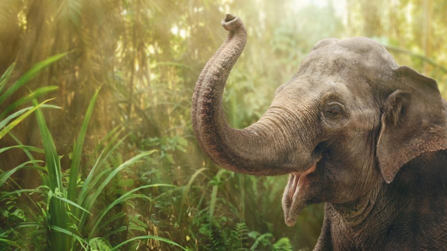 <p><strong>Слонове танцуват</strong>, запленени от едно пиано</p>