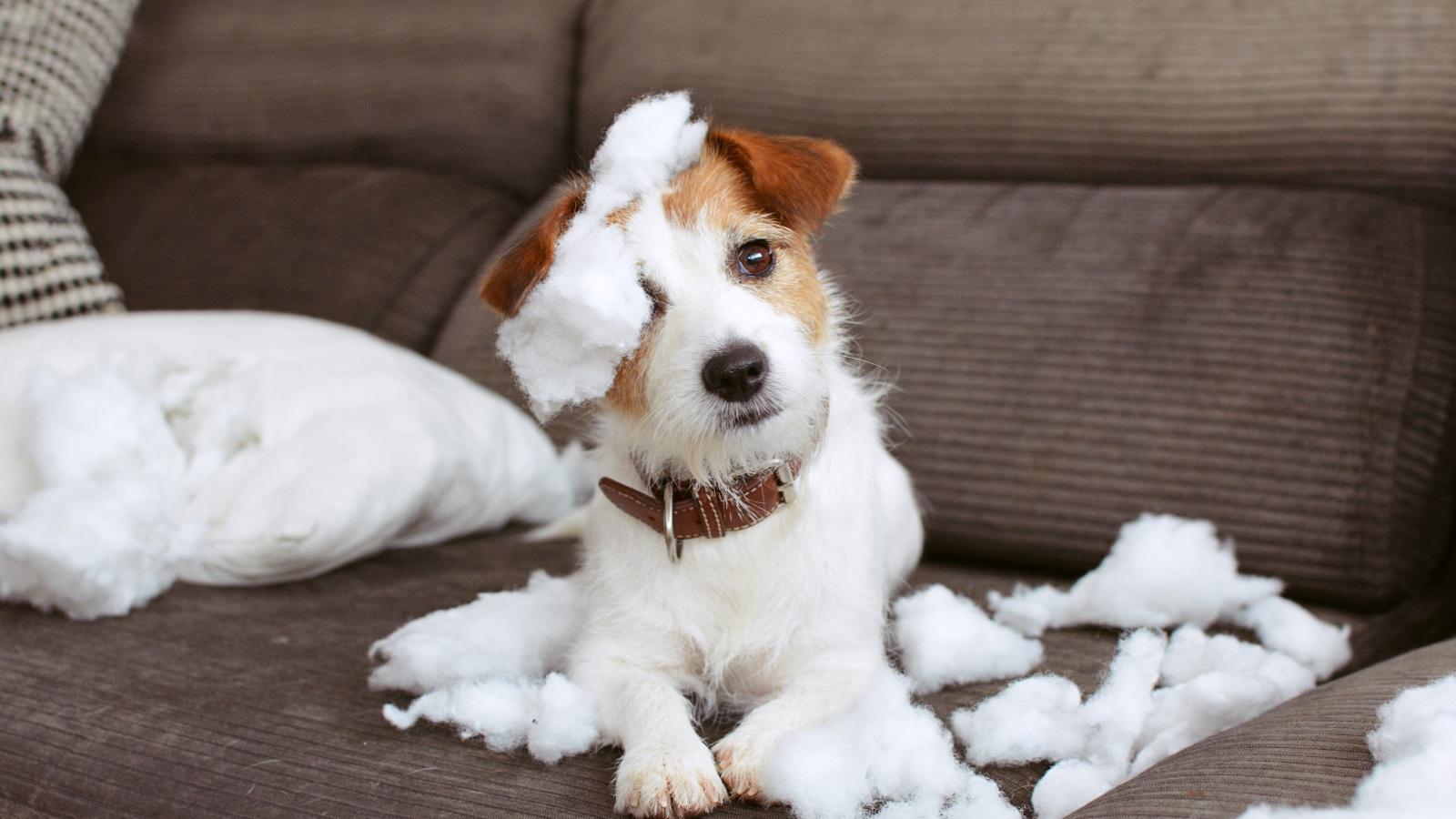 <p>Ако сте се питали какви ги вършат кучетата и котките, когато останат сами у дома, можете да потърсите отговори в британско проучване, разкриващо тайния живот на четириногите питомци.</p>