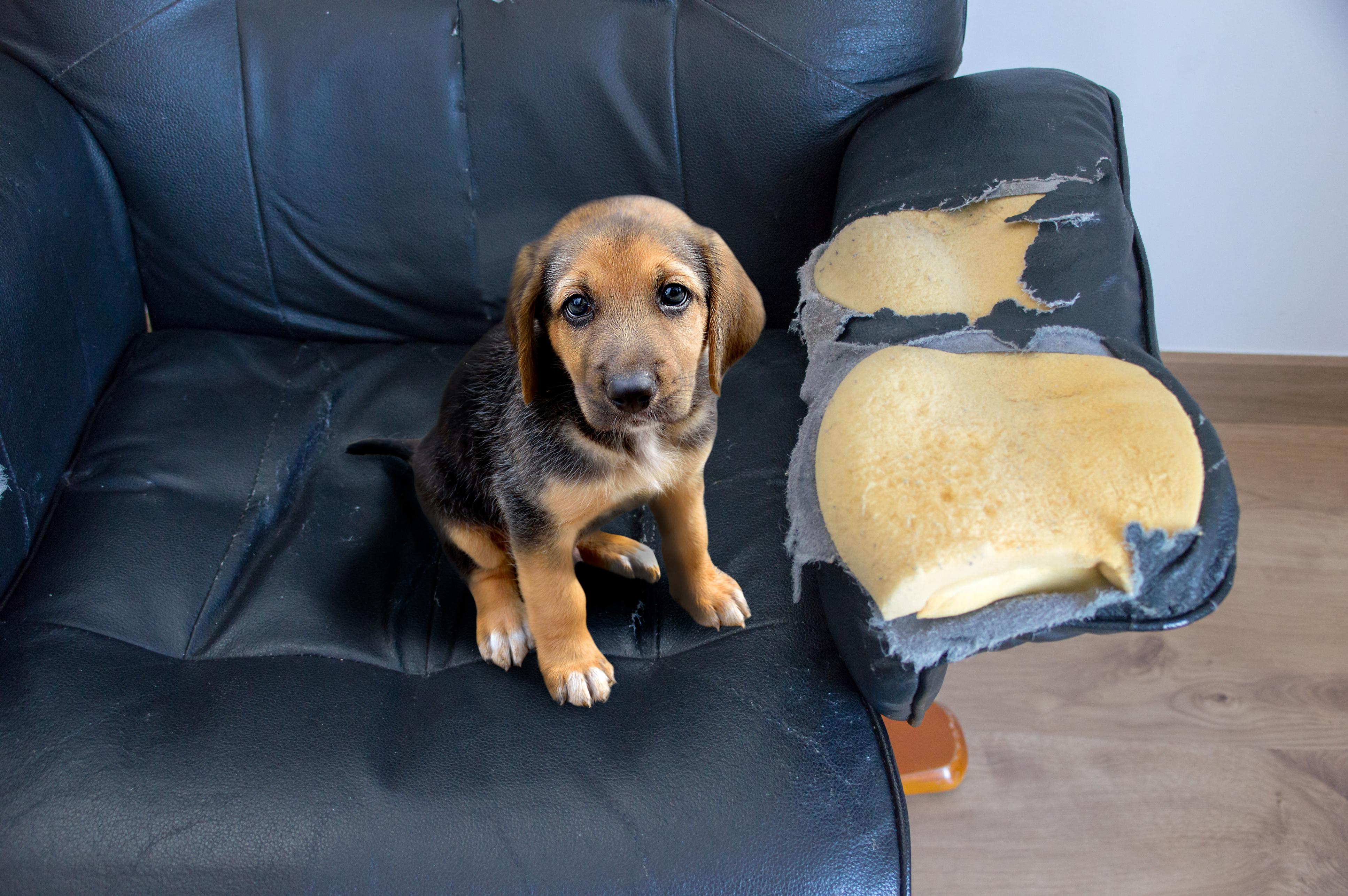 <p>&quot;Камерите за наблюдение са изключително полезни. Благодарение на тях стопаните могат да разберат какво влече питомците им, което в някои ситуации може да се окаже животоспасяващо - както в случая с куче, което оставено само тършува из хладилника и шкафовете за храна&quot; казва&nbsp;Райън Нийл от организацията.</p>
