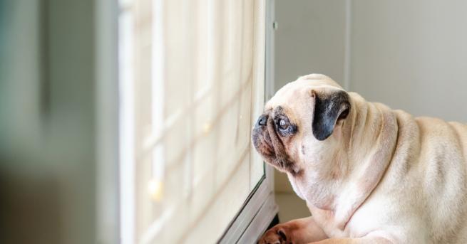 Любопитно Самотата: 5 неща, които не знаем Това усещане може