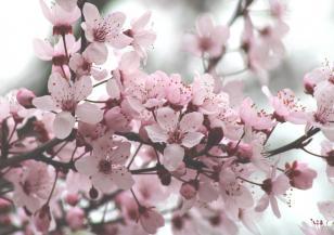Растенията се объркват заради топлата зима
