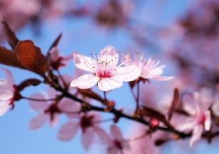 Ще се радваме ли на топла пролет