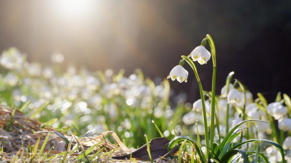 пролет цветя сутрин време прогноза времето