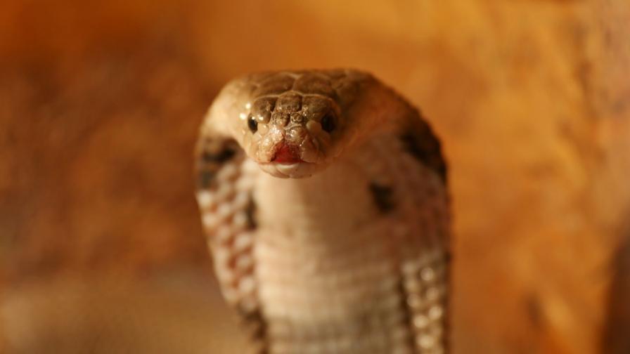 Буболечки змии музейко гущери