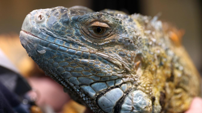 <p>Над 20 змии, сред които тайпани, мамби, кобри, кроталиди, гърмящи змии и екзотични смоци ще видим зад стъкло в пространството за временни изложби на Детския научен център.</p>