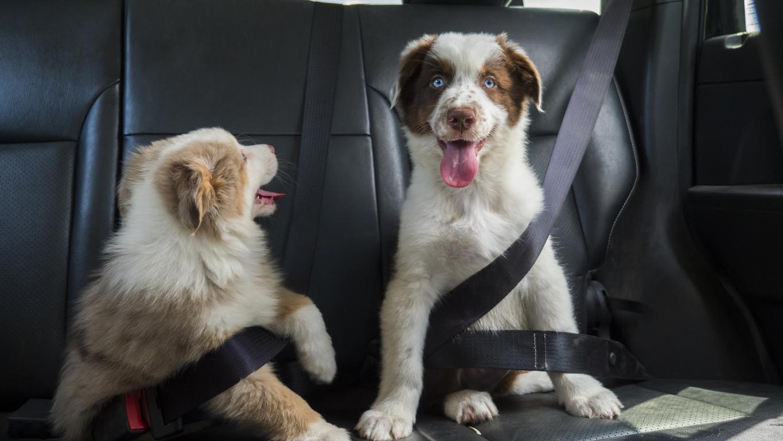 <p><strong>Домашни любимци</strong></p>  <p>Никога не допускайте грешката да ги оставяте сами в автомобила!</p>