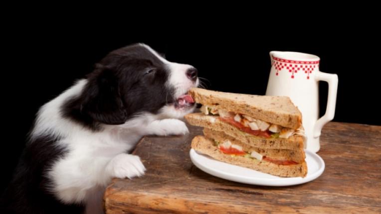 куче домашен любимец навици правилно хранене дресировка алергии