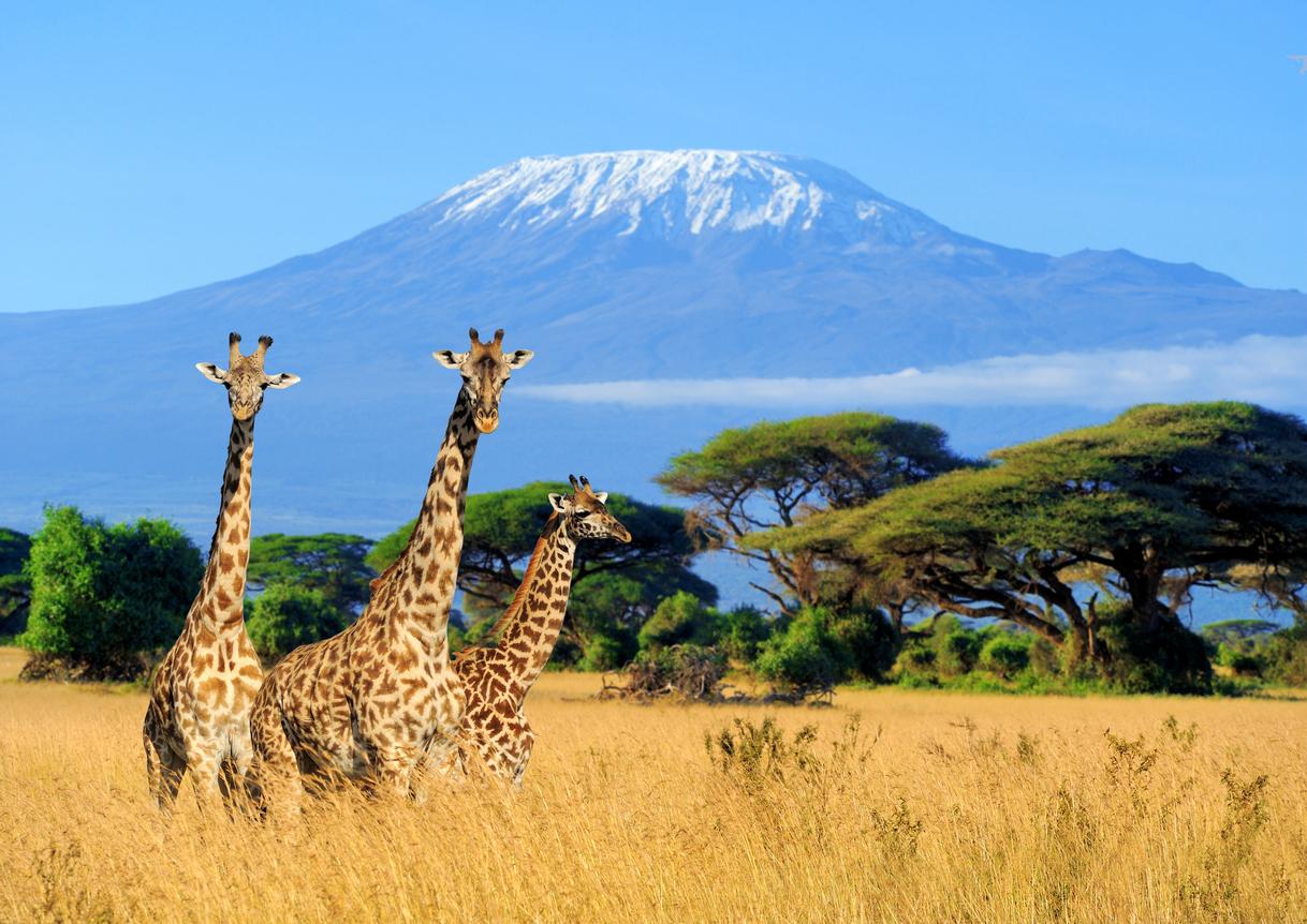 <p><strong>5. Кой от тези художници е роден в Испания?</strong></p>  <p>В) Антони Гауди</p>  <p><strong>6. На територията на коя африканска държава се намира планинският масив Килиманджаро?</strong></p>  <p>А) Танзания</p>