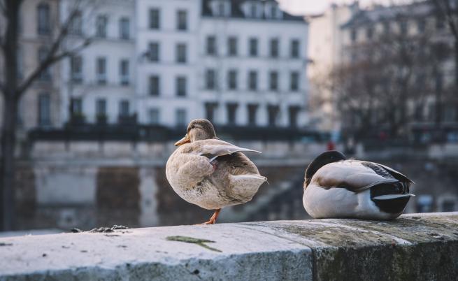 Франция: Eлени, делфини, маймуни, диви свине, животните свободно заживяха в градовете