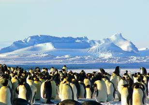 Регистрирана е топлинна вълна на Антарктида