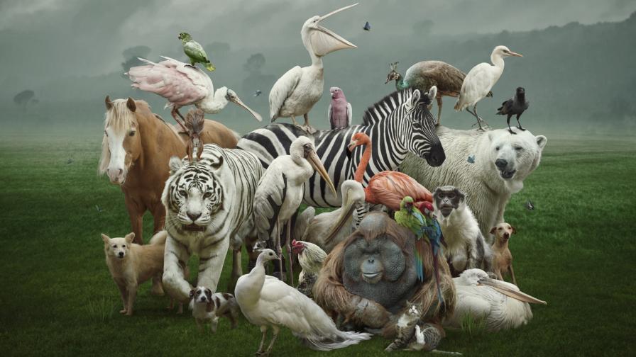 <p>Руска художничка прави най-сладките животни от &hellip; (снимки)</p>
