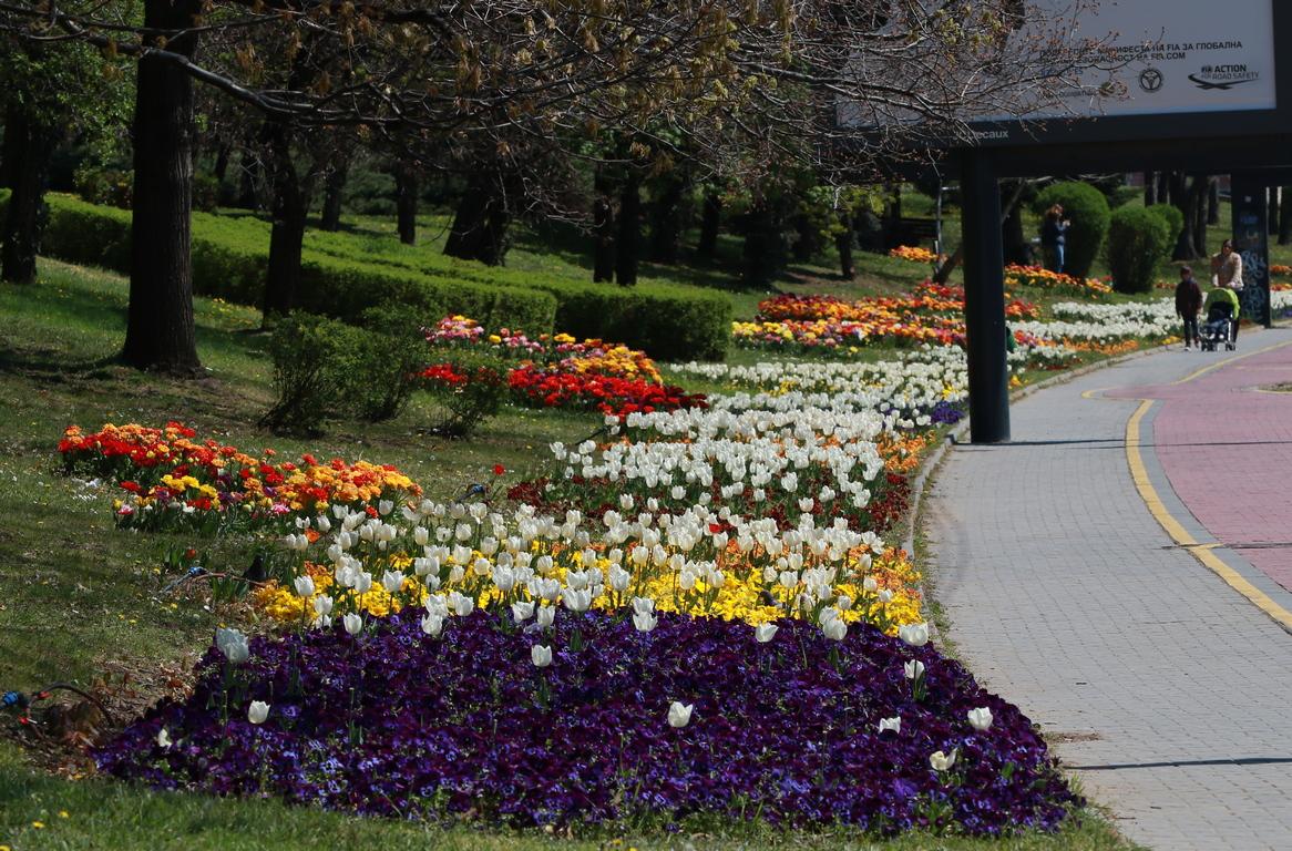 <p>Пролетни багри в София</p>