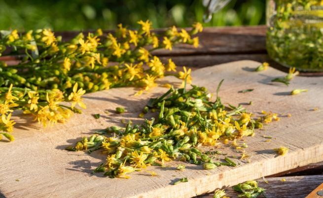 Тази билка ще сложи край на проблемите ви с бъбреците
