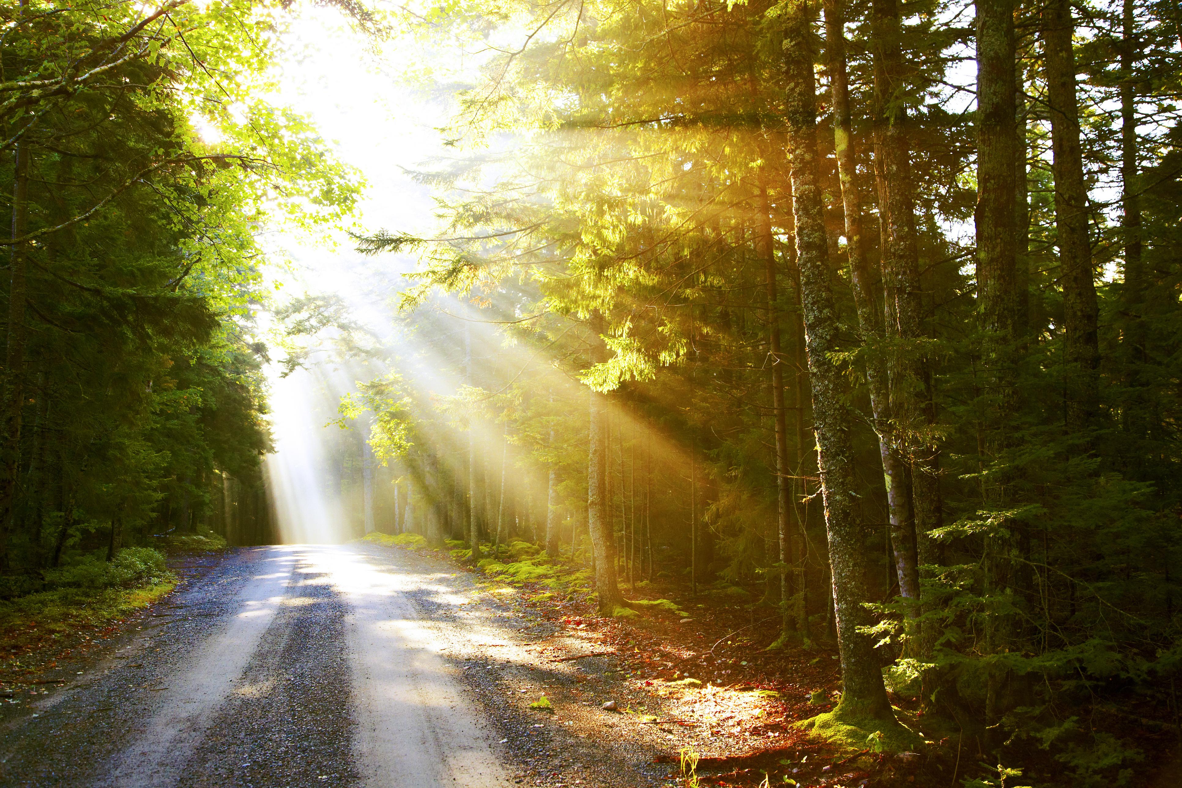 <p><strong>ОВЕН</strong></p>  <p>- Щастието &ndash; това са близките хора. Богатството идва и си отива, а приятелите и семейството са винаги до вас. Ценете любовта и приятелството.</p>  <p>- Понякога трябва само да се освободите от нещо, за да станете по-щастливи.</p>  <p>- Най-добрият начин за решаване на проблемите &ndash; да се научите как да&nbsp; избягвате срещи с тях.</p>