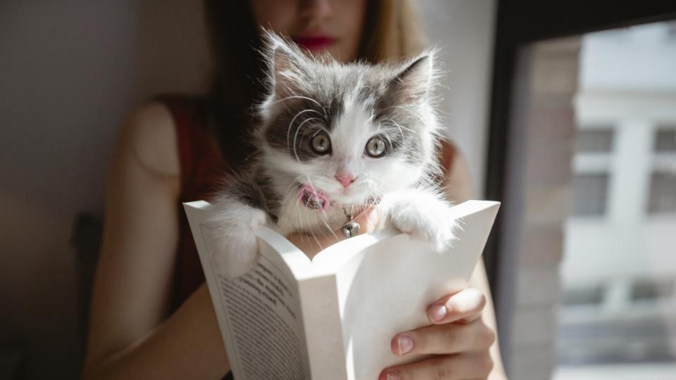 коте котка книга уикенд почивка четене