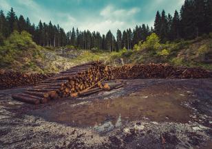 Обезлесяването се е увеличило по време на пандемията