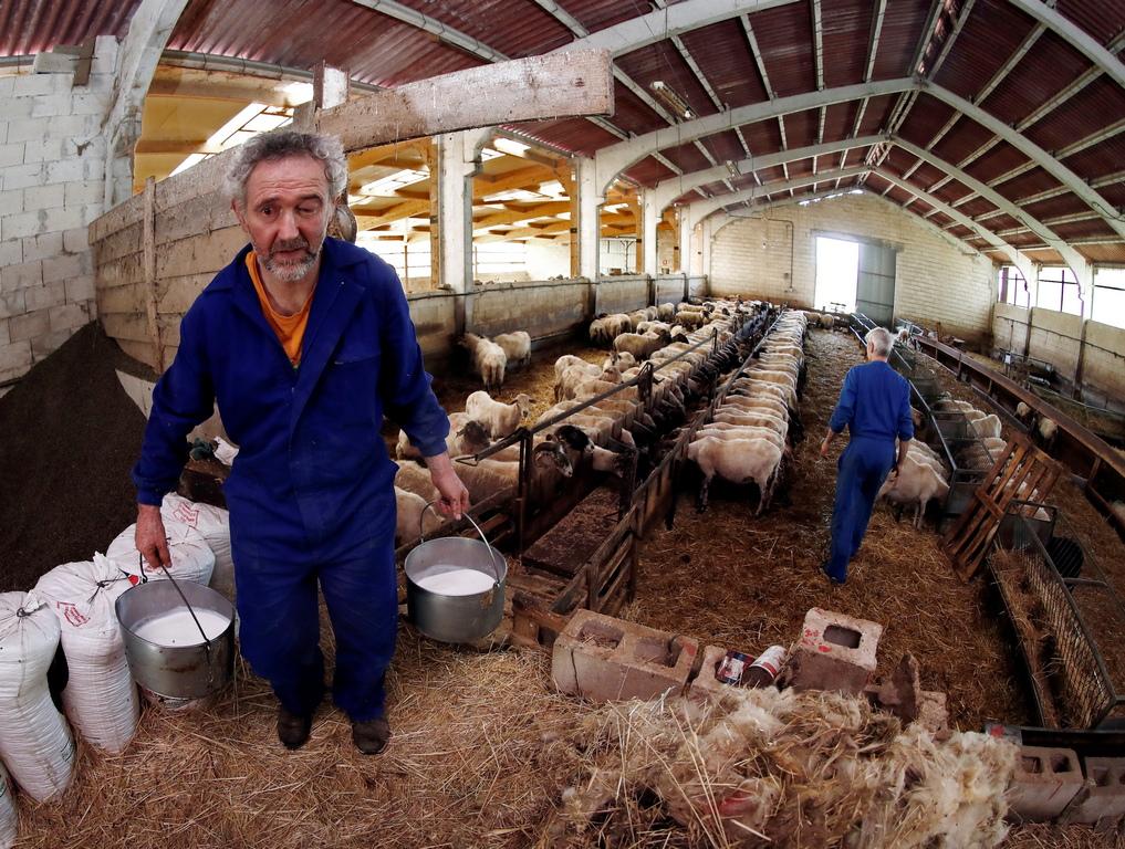 <p>След като издоят животните, те прецеждат млякото, което след това преминава през процеса на млечно-кисела ферментация, сгъстява се, оформят го и покриват с кърпа.</p>  <p>&nbsp;</p>
