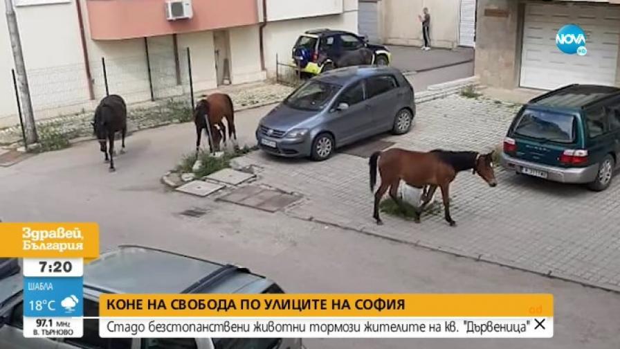 В 21 век: Стадо коне плаши деца и минувачи в столичен квартал