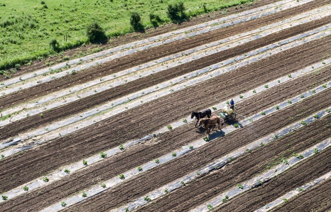 <p>Машини като автоматични почистващи устройства за подове в хамбари исторически са отхвърлени, тъй като предоставят на младите фермери твърде много свободно време</p>  <p>&nbsp;</p>