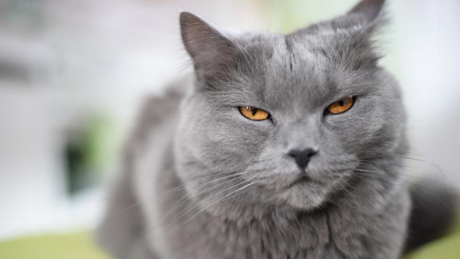 Котка уби стопанката си с целувка на смъртта