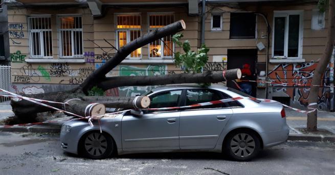 България Дърво премаза кола в центъра на София Инцидентът е
