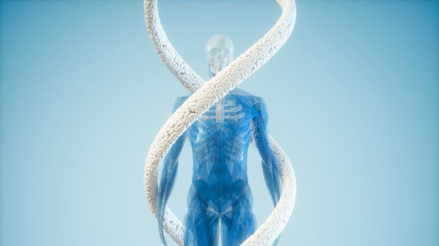 Телата на предците на хората били значително по-различни