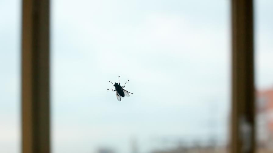 Какво не знаем за мухите - любопитни факти