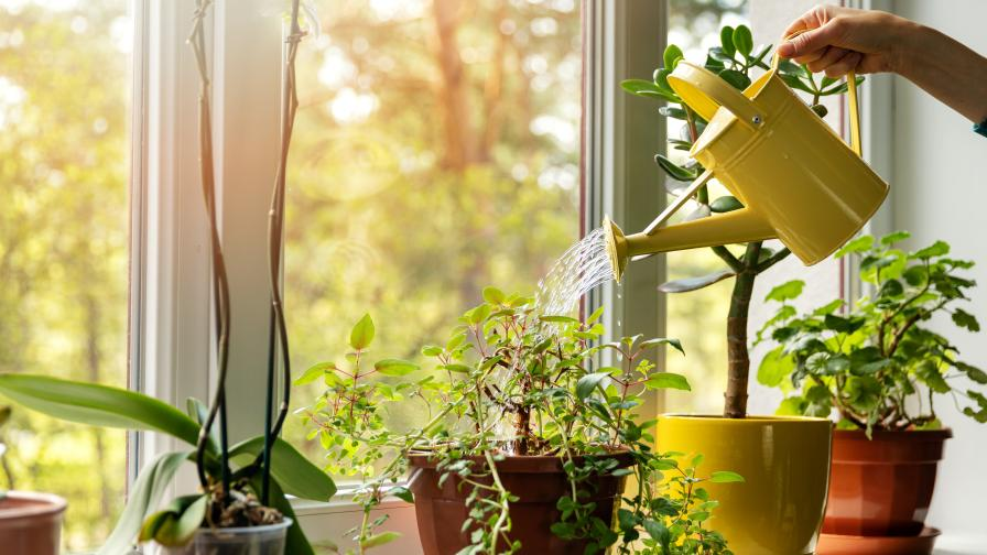 Ето как да съживим умиращите растения у дома