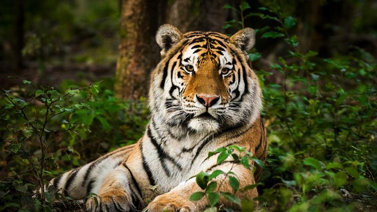 Кое е твоето духовно животно според зодията