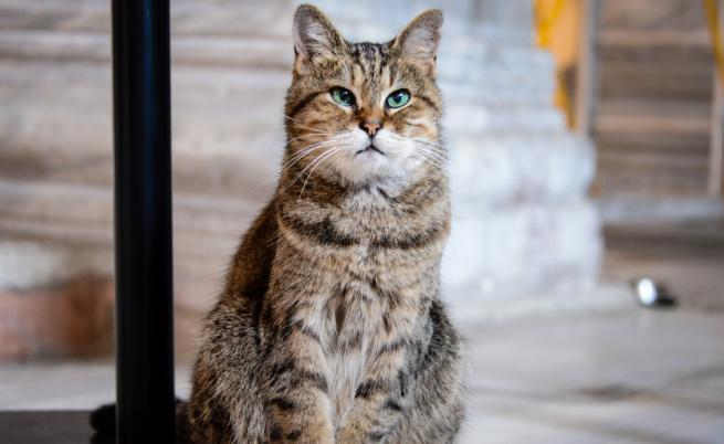 Котката, която ще остане и след промените в