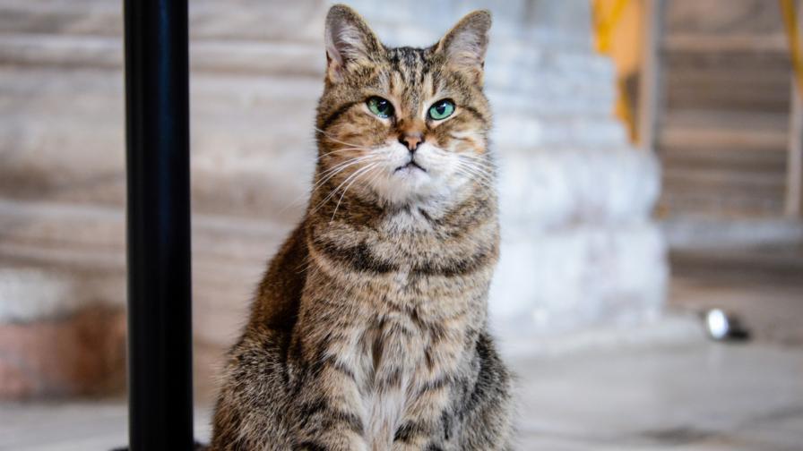 """Котката, която ще остане и след промените в """"Света София"""""""