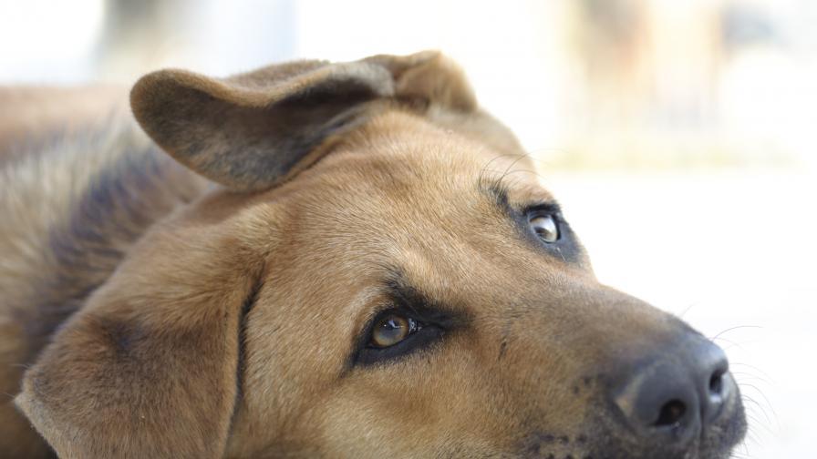 Поредна жестокост: Хвърлиха куче от 3-ия етаж, вързано в торба