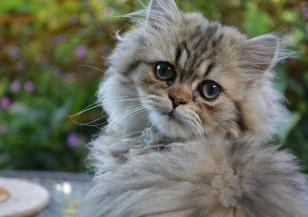 Днес е Международният ден на котката