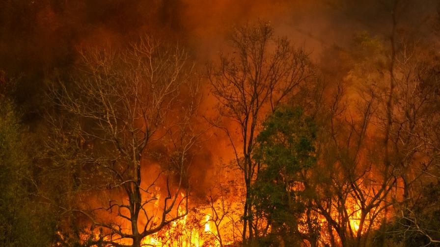2020 – година на природни бедствия