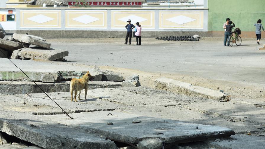 """В Северна Корея: """"Предайте кучетата си за месо в ресторантите"""""""