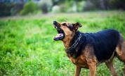 Куче нахапа жестоко 9-годишно дете