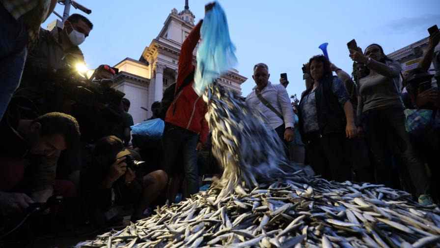 48-и ден на протести: Мъртва риба пред Министерски съвет