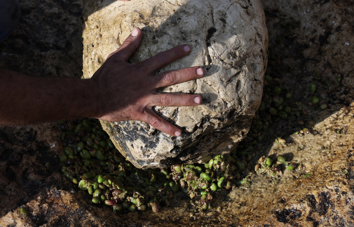<p>Традиционен метод, наречен (Al-Badd), използван за смачкване на маслини за получаване на зехтин в палестинското село Кафр Ал - Лабад, близо до град Тулкарем на Западния бряг.</p>