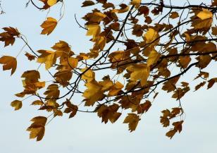 Жълт код за силен вятър в 14 области в сряда