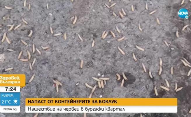 Кошмар в бургаски квартал: Червеи плъзнаха от кофите за боклук