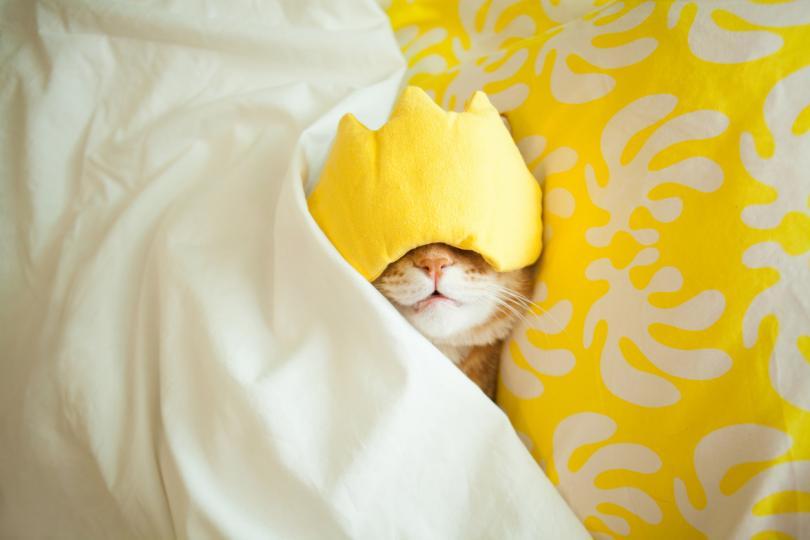 <p><strong>Жълто.</strong>&nbsp;Жълтият цвят обикновено се асоциира със светлината и слънцето. И въпреки че този оптимистичен цвят е отличен за началото на деня, вероятността да затрудни заспиването вечерно време е много голяма.</p>