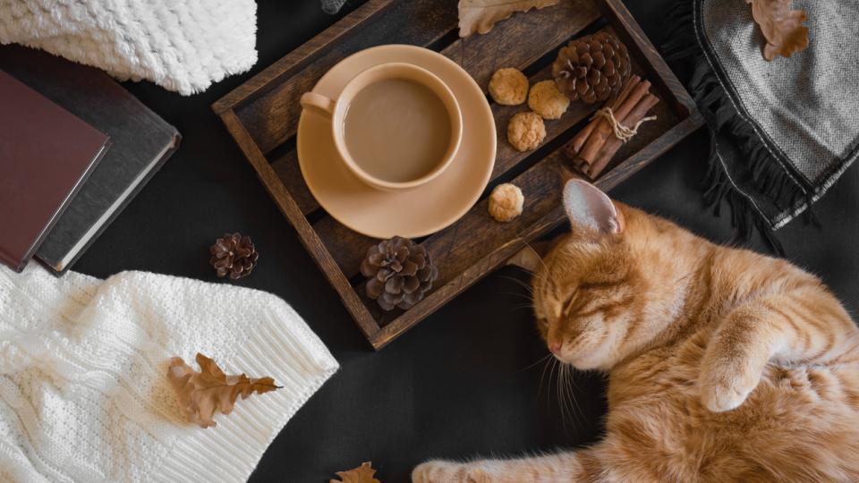 котка есен дневен