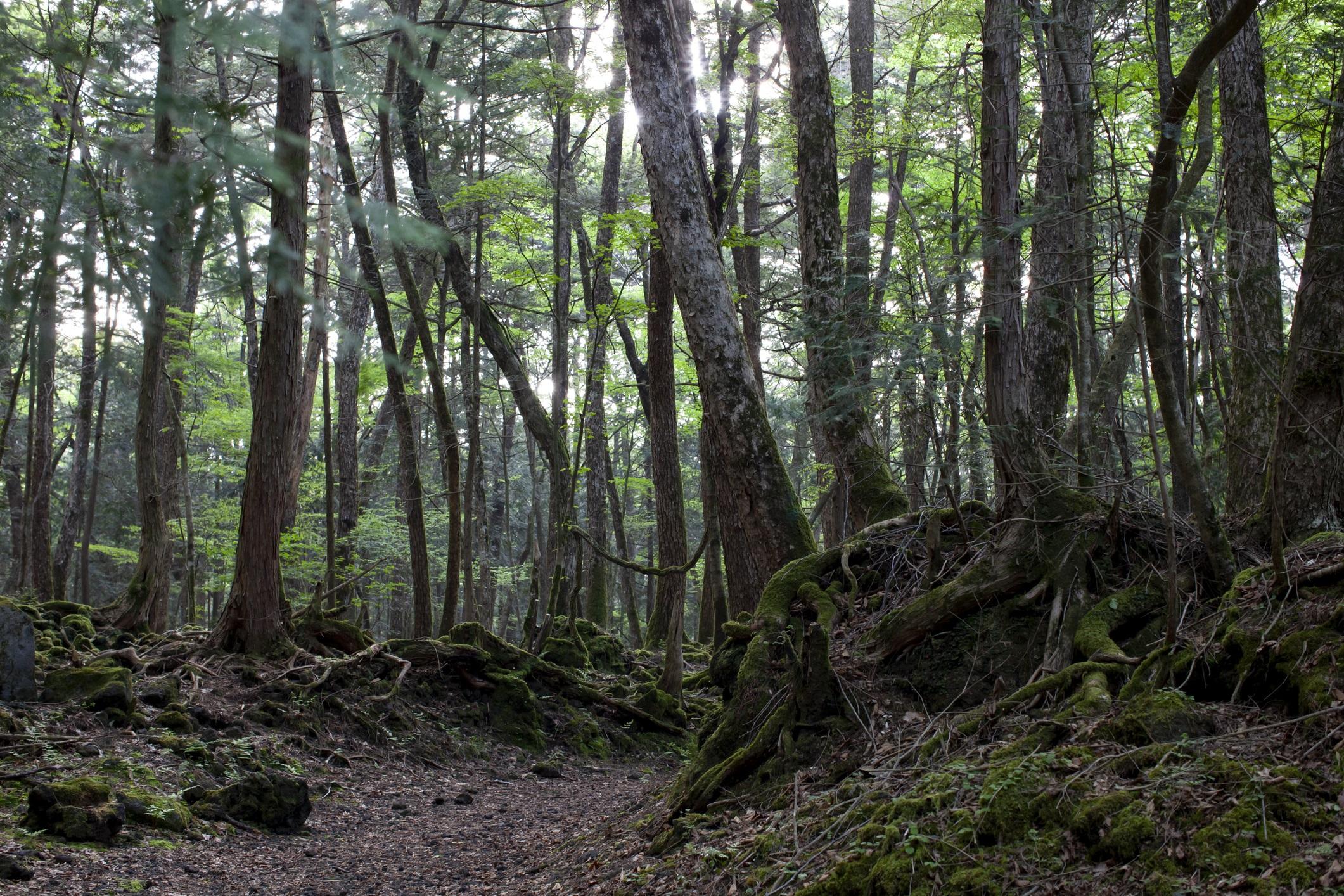 <p><strong>Гората Аокигахара</strong></p>  <p>Аокигахара или &bdquo;Гората на самоубийствата&rdquo; в Япония е определение за трагична красота. Наричана още &bdquo;Море от дървета&rdquo;, това е място на множество самоубийства, датиращи чак от 1900 г. Табела на входа напомня, че &bdquo;животът е ценен подарък&rdquo;.</p>