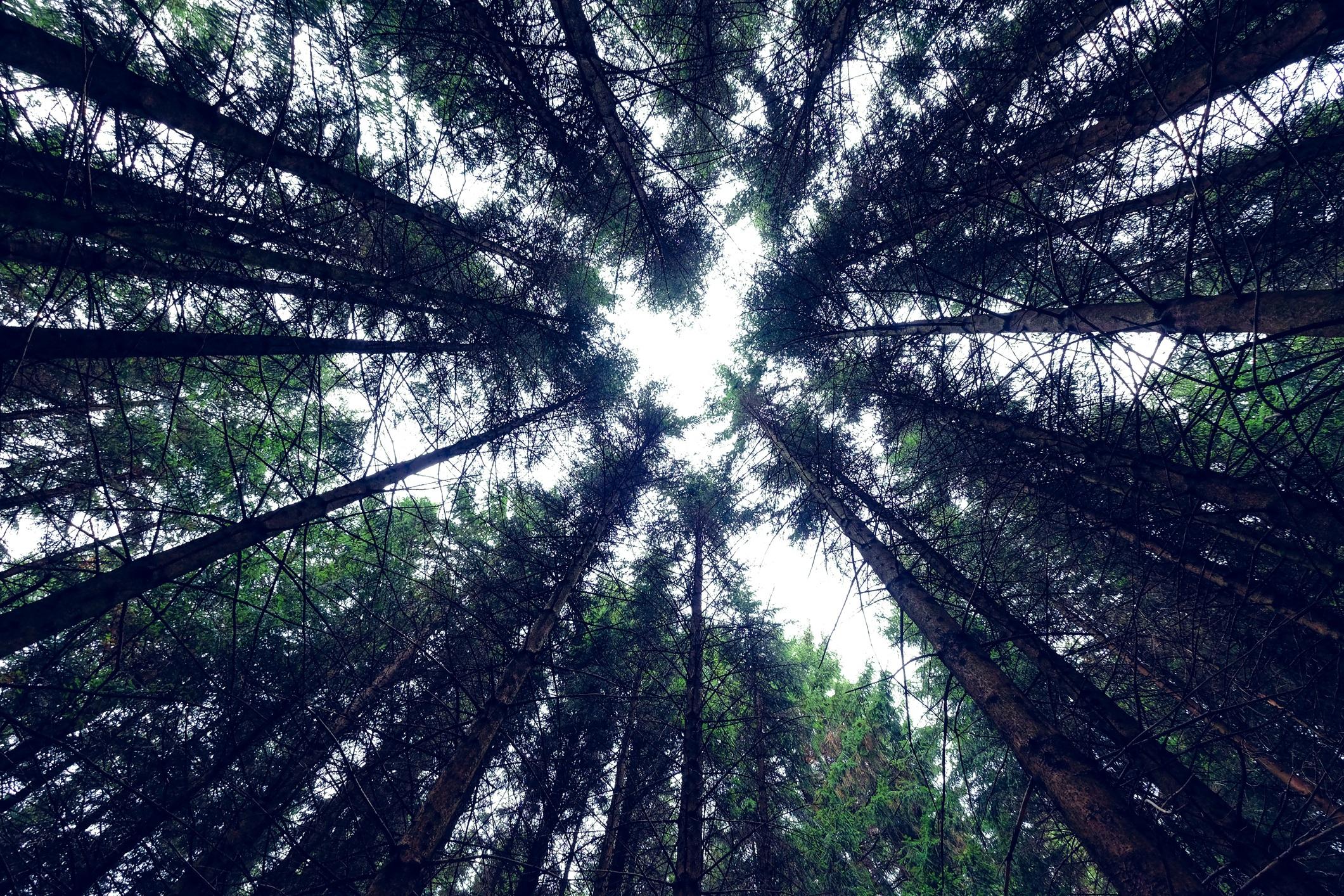 <p>Сгушена в Югозападна Германияи граничеща с река Рейн, вечнозелените дървета на Черната гора са толкова красиви, колкото и зловещи и се твтърди, че са дом на паранормални същества вариращи от вещици до върколаци.</p>