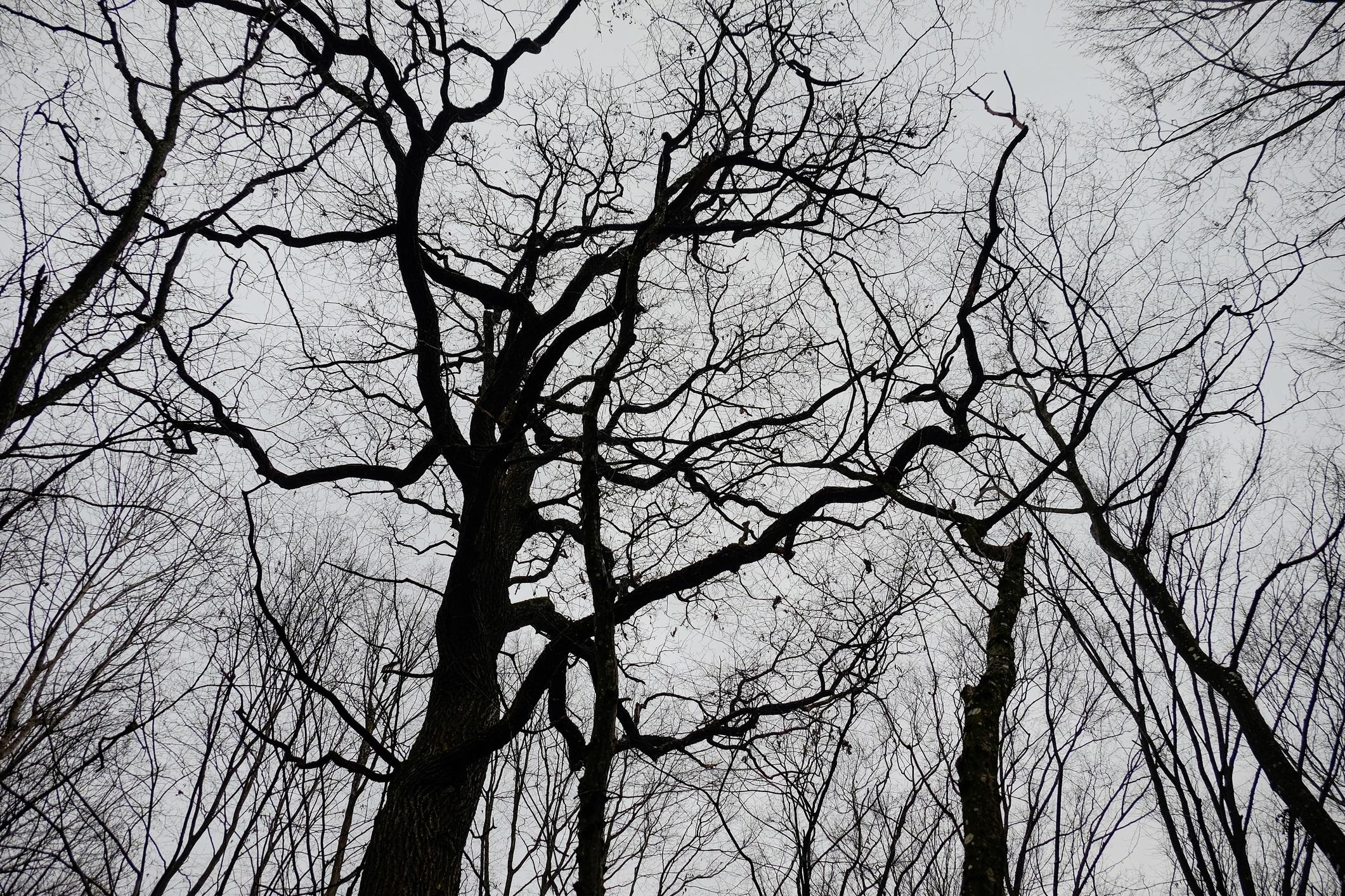 <p>Просеката озадачава учените и хората от десетилетия. Това е място, където нищо не расте и никога нищо не е пораствало, според официалните данни. Още по-странното е, че дърветата в тази част а гората растат в странни модели &ndash; зигзад и спирали, които никой не е могъл да обясни.</p>