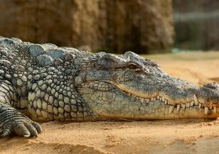 Крокодилите не са кръвожадни чудовища