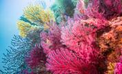 Откриха подводен небостъргач от корали, по-висок от Емпайър стейт билдинг
