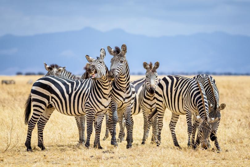 Най-дългата бременност в животинския свят