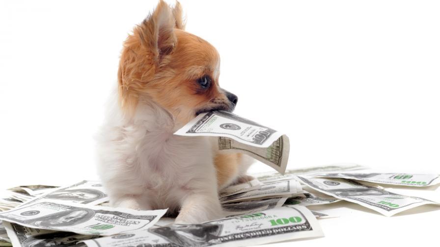 <p>Най-скъпите породи кучета (Снимки)</p>